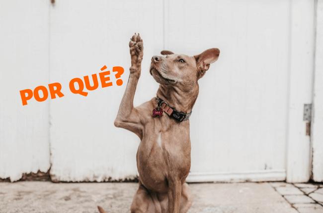Por qué : pourquoi en espagnol